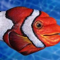 6fe52-clown-fish1-475x340