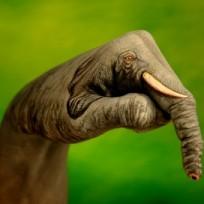 a0c0d-elephant-on-green1-432x340